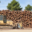 Pine firewood stacked and bulldozer - Stock Photo