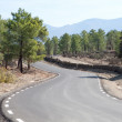 Road in the middle of a pine forest on the mountain - 图库照片