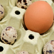 Differents eggs - Stock Photo