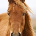 Horse — Stock Photo #9438740