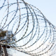 Coiled barbed wire fence - Stock Photo