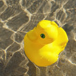 Toy duck — Stock Photo #9438867