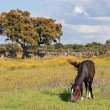 Nice horse grazing — Stock Photo #9438916