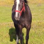 Nice horse — Stock Photo