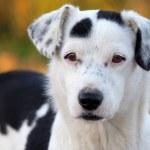 Постер, плакат: Picture of a adorabe dog