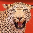 Nice portrait of leopard stuffed — Stock Photo #9439085