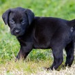 Adorable small dog — Stock Photo #9439146