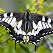 Butterfly - Stockfoto