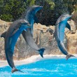 Dolphins — Stock Photo #9439248