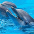Happy dolphins - Stock Photo