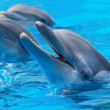 Happy dolphins — Stock Photo #9439271