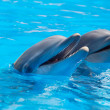 Happy dolphins — Stock Photo #9439273