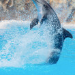 Dolphin — Stock Photo #9439276