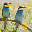 Couple of birds — Stock Photo