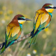 Stock Photo: Couple of birds