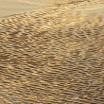 Sand — Stock Photo #9439502
