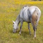 Horse eating — Stock Photo