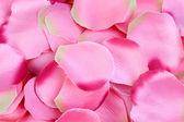 Hintergrund für die Rosenblüten — Stockfoto