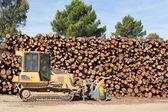 Pine brännved staplade och bulldozer — Stockfoto