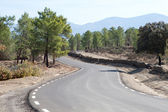 Road in the middle of a pine forest on the mountain — Stock Photo
