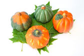 Pumpkins about four green leaf — Stock Photo