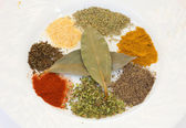 White dish with many spices — Stock Photo