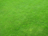 Beautiful green lawns — Stock Photo