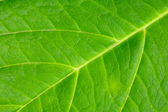 Texture of a green leaf — Stock Photo