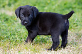 Adorable small dog — Stock Photo