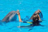 Dolphins — Stock Photo
