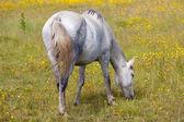 лошади едят — Стоковое фото