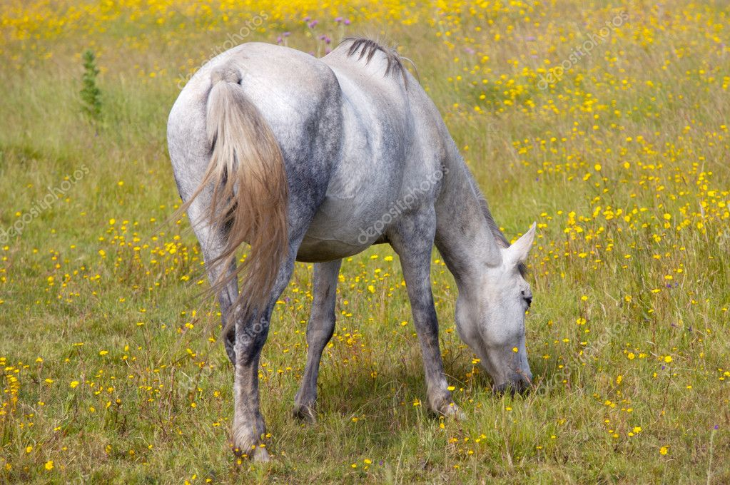 Photo of a horse in freedom eating grass — Stock Photo #9439643
