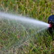 Sprinkler watering - Stockfoto