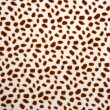 Leopard pattern texture — Stock Photo