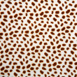 Royalty-Free Stock Photo: Leopard pattern texture