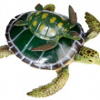 Turtle with your son — Stock Photo #9440340