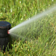 Sprinkler watering - Stock Photo