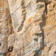 Macro of a cliff wall - Stok fotoğraf