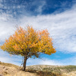 Solitary tree - Photo