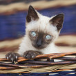 Precious little cat in a basket — Stock Photo