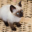 Precious little cat in basket — Foto de stock #9440617