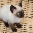 Stock Photo: Precious little cat in basket