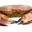Photo of edible crabs — Stock Photo #9440811