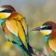 Foto Stock: Couple of birds