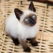 Precious little cat in a basket - Stock Photo