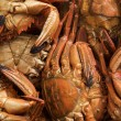 Seafood freshly caught sea -  