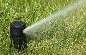 Sprinkler watering — Stock Photo