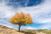 Solitary tree — Stock Photo
