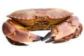 Photo of edible crabs — Stock Photo