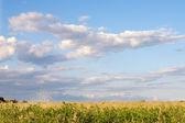 Photo of pretty field — Stock Photo